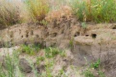 Bird& x27;s nest in hole on wall of landslide rock on Azov Sea coast. stock photos