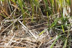 Bird's nest in natural habitat. Stock Photos