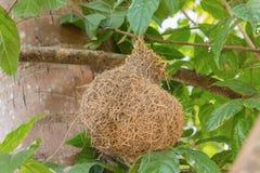Bird`s nest In nature beautiful. Stock Photos
