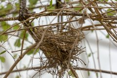 Bird`s nest in nature on a steel frame. stock image