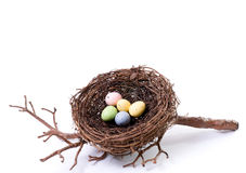 Bird's Nest With Pastel Eggs Royalty Free Stock Photography