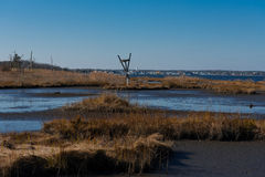 Bird's Nest in the Salt Marshes. A bird's nest in the Sal Marshes on  a crisp Autumn day Stock Photo
