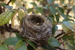 Bird`s Nest Stock Image