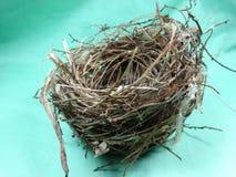 Bird's nest Stock Photography