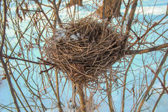 Bird's nest. Of thin dry twigs on the bushes Stock Photo