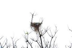 Bird`s nest on the top wood. Stock Image