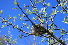Bird's Nest in Tree Royalty Free Stock Photography