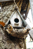 Bird`s nest. On the tree Stock Photography