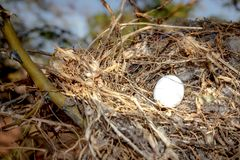 Bird`s nest in a tree royalty free stock photo
