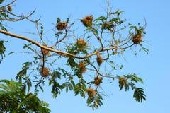 Bird's Nest on the tree Stock Photo