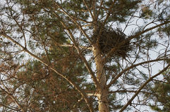Bird's nest in a tree Stock Photography
