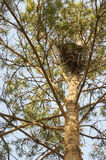 Bird's nest in a tree Royalty Free Stock Images