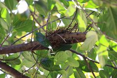 Bird`s nest on the tree But there are no birds