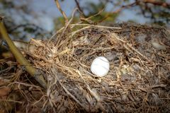 Bird`s nest in a tree royalty free stock photography