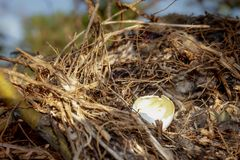 Bird`s nest in a tree stock photography