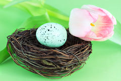 Bird's Nest and Tulip Stock Photos