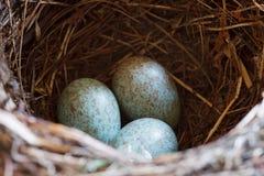 Bird´s nest Stock Photo