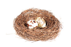 Bird's nest with two eggs Stock Images