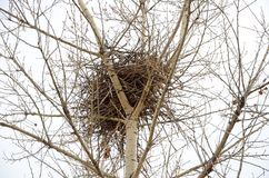 Bird`s nest woven on the top of a tree stock photography