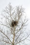 Bird`s nest woven on the top of a tree royalty free stock photos