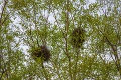 Bird's nests. Stock Photos