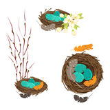 Bird`s nests with eggs set Stock Photos