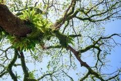 Bird's net fern on branch of tree Stock Photo
