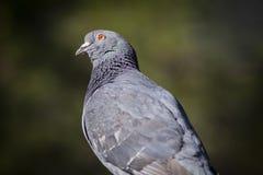 Bird& x27; s oka widok zdjęcia royalty free