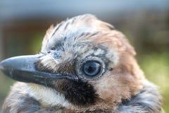 Bird& x27; s oko i głowa Zdjęcia Royalty Free