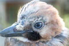 Bird& x27; s oko i głowa Obraz Stock