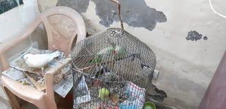 Bird& x27;s pirate love royalty free stock photo