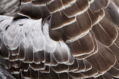 Bird's plumage background Royalty Free Stock Photography