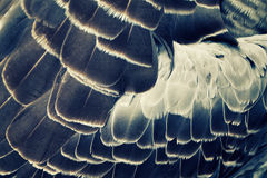 Bird's plumage background Stock Photography
