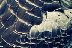 Bird's plumage background Stock Photography