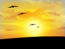 Bird's silhouette. With the sunshine in the bottom Royalty Free Stock Photo
