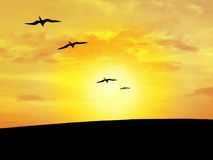 Bird's silhouette. With the sunset in the bottom Royalty Free Stock Photography