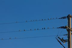 Bird s on wire. Birds on wire blue sky Stock Photography