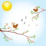 Bird sakura Stock Photos