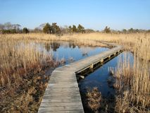 Bird Sanctuary in Cape May, NJ Royalty Free Stock Photos