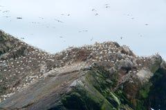 Bird sanctuary detail at Seven Islands Royalty Free Stock Photos
