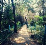 Bird sanctuary near sagara shivamogga district Stock Photos