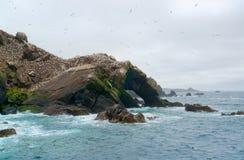 Bird sanctuary at Seven Islands Stock Images