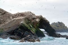 Bird sanctuary at Seven Islands Stock Image