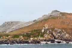 Bird sanctuary at the Seven Islands Royalty Free Stock Photos