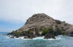Bird sanctuary at Seven Islands Royalty Free Stock Photo