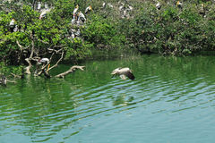 Bird Sanctuary. Vedanthangal Bird Sanctuary landscape-tamilnadu,india Stock Images
