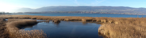 Bird Sanctuary Wetland. A panoramic elevated view of a wetland bird sanctuary on Lake Neuchâtel in Switzerland royalty free stock photos