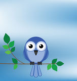 Bird sat on a tree. Branch against a blue sky Stock Image