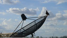 Bird on Satellite dish under wide  blue sky and white cliuds Stock Photos