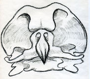 Bird scull sketched Stock Photos